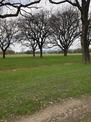 Hagley Park in Christchurch